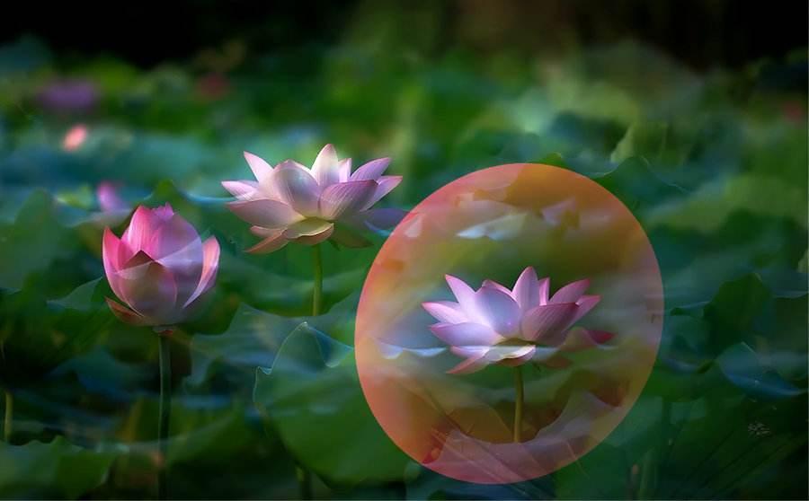 一切关系都是与自己的关系--云居寺内观禅修感受与体悟
